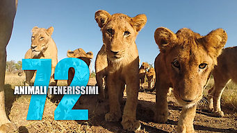 72 animali tenerissimi - Netflix