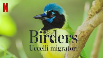 Birders - Uccelli migratori (2019)