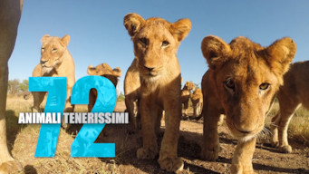 72 animali tenerissimi (2016)